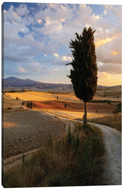 Countryside Sunset, Val d'Orcia, Tuscany, Italy Canvas Art Print