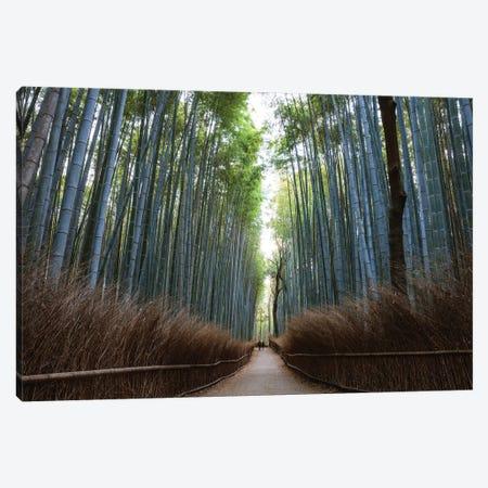 Arashiyama Bamboo Forest, Kyoto, Japan Canvas Print #TEO345} by Matteo Colombo Canvas Wall Art