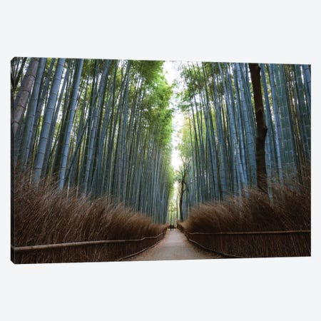 Arashiyama Bamboo Forest, Kyoto, Japan Canvas Print #TEO345} by Matteo Colombo Canvas Wall Art
