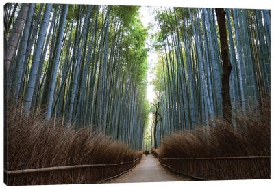 Arashiyama Bamboo Forest, Kyoto, Japan Canvas Art Print