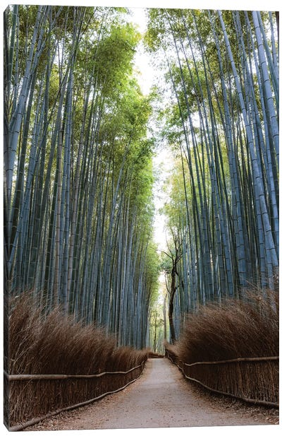 Arashiyama Bamboo Grove, Kyoto, Japan Canvas Art Print