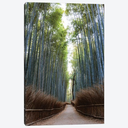 Arashiyama Bamboo Grove, Kyoto, Japan Canvas Print #TEO346} by Matteo Colombo Canvas Art