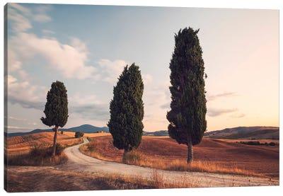 Cypress Lined Road, Tuscany, Italy Canvas Print #TEO34