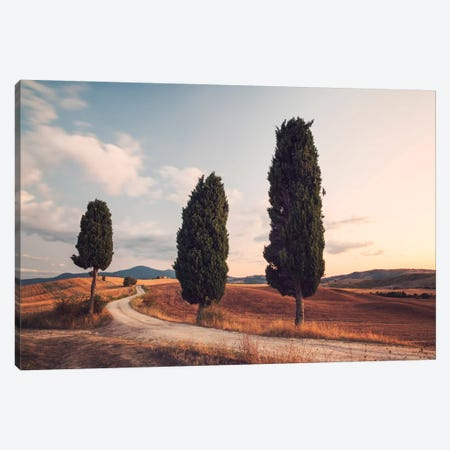 Cypress Lined Road, Tuscany, Italy Canvas Print #TEO34} by Matteo Colombo Canvas Artwork