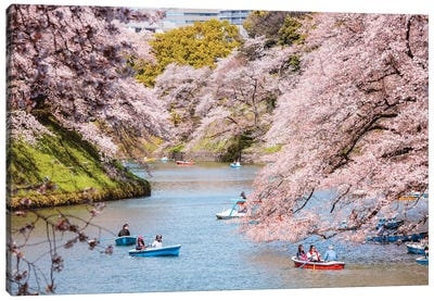 Cherry Blossom In Tokyo, Japan II Canvas Art Print
