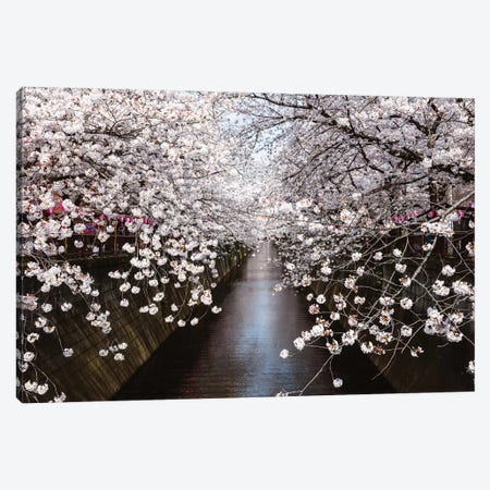 Cherry Blossom Season, Tokyo, Japan Canvas Print #TEO359} by Matteo Colombo Canvas Artwork