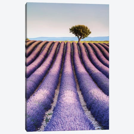 Lavender Field, Provence I Canvas Print #TEO381} by Matteo Colombo Canvas Print