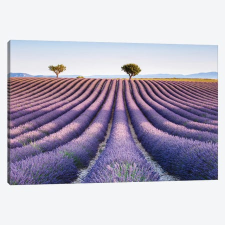 Lavender Field, Provence II Canvas Print #TEO382} by Matteo Colombo Canvas Art Print