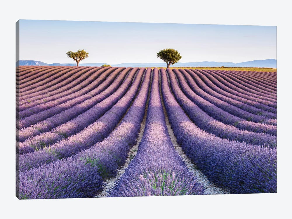 Lavender Field, Provence II by Matteo Colombo 1-piece Canvas Wall Art