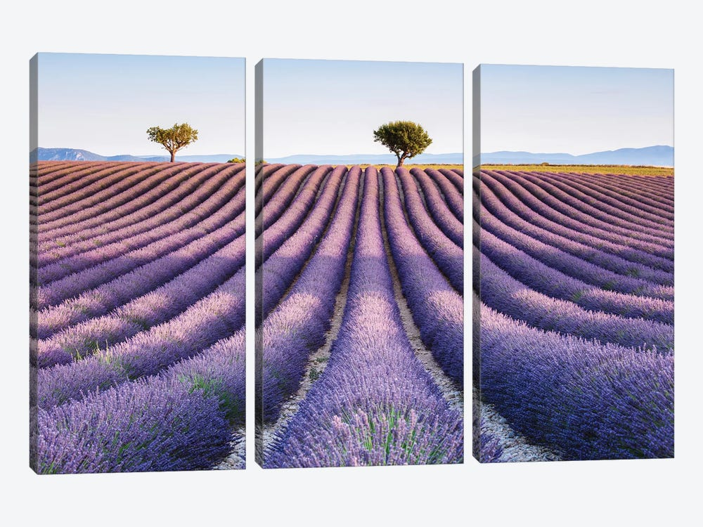 Lavender Field, Provence II by Matteo Colombo 3-piece Canvas Artwork