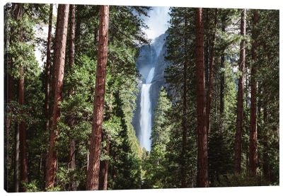 Lower Yosemite Fall And Forest Canvas Art Print
