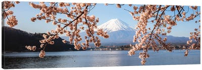 Mount Fuji And Cherry Trees, Japan I Canvas Art Print