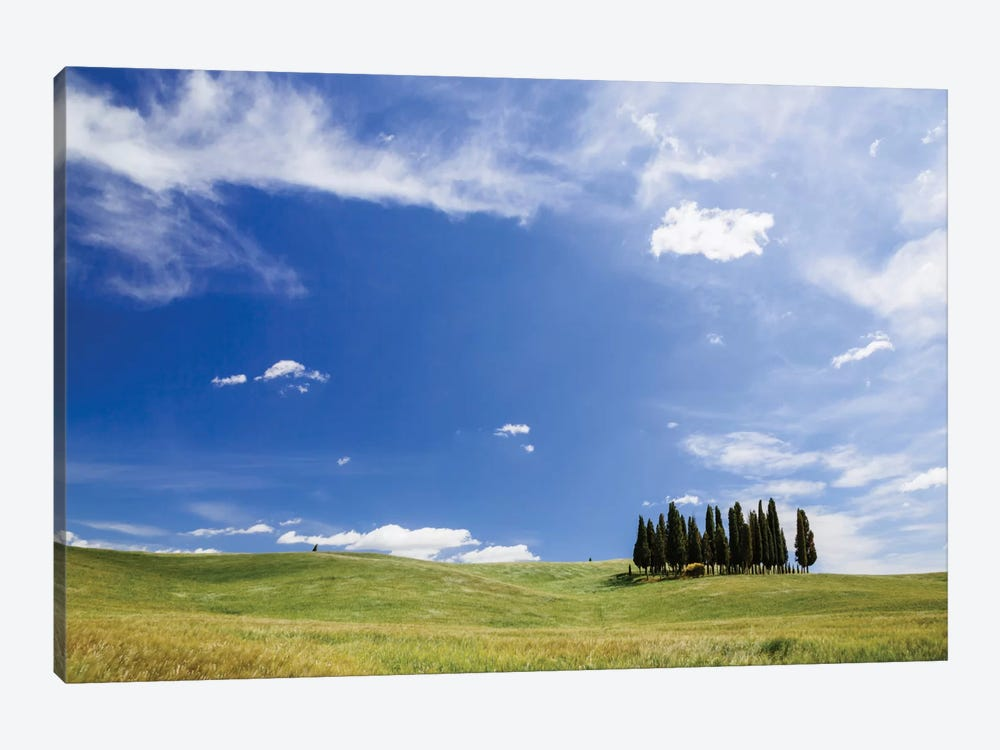 Famous Cypress Tree Grove, Val d'Orcia, Tuscany, Italy 1-piece Canvas Artwork