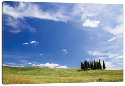 Famous Cypress Tree Grove, Val d'Orcia, Tuscany, Italy Canvas Art Print