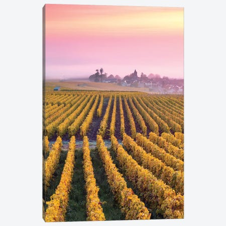 Vineyards In Autumn, Champagne, France II Canvas Print #TEO455} by Matteo Colombo Canvas Art