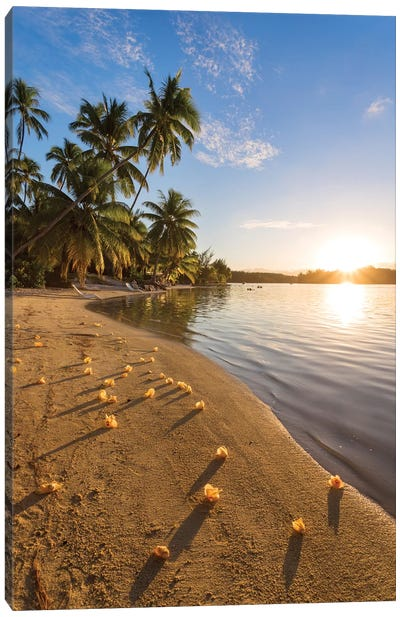 Beach Sunset, Tahiti Canvas Art Print