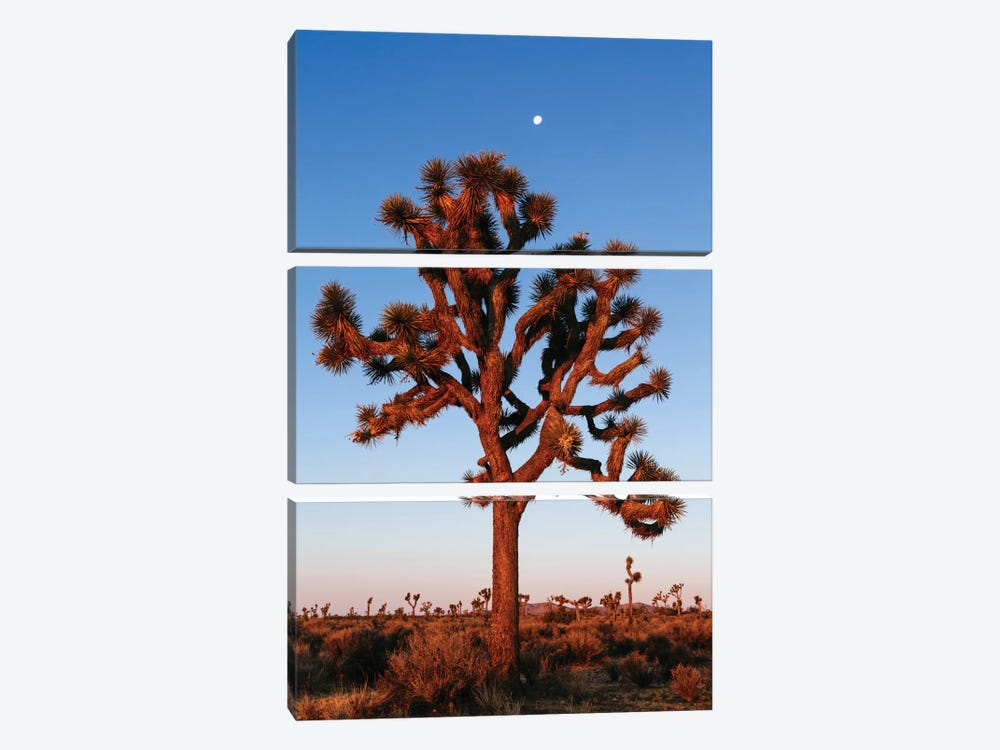 Joshua Tree, California, USA by Matteo Colombo 3-piece Canvas Art