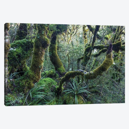 Mossy Rainforest, New Zealand Canvas Print #TEO493} by Matteo Colombo Canvas Art Print