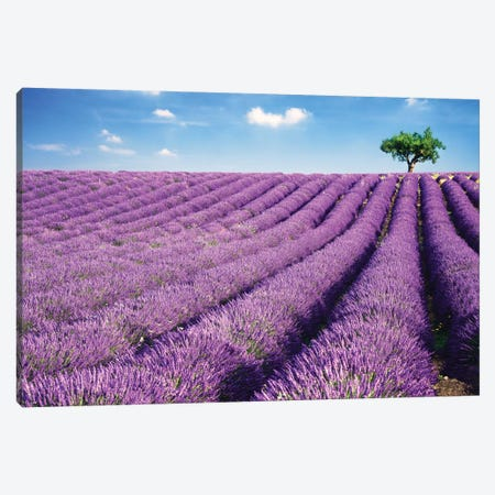 Lavender Field And Tree In Summer, Provence, France Canvas Print #TEO49} by Matteo Colombo Canvas Artwork