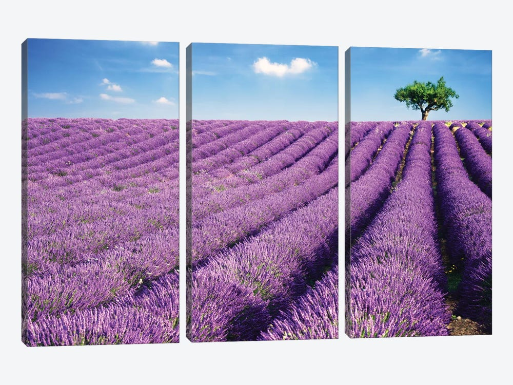 Lavender Field And Tree In Summer, Provence, France by Matteo Colombo 3-piece Canvas Art Print
