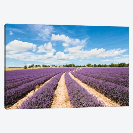 Lavender Field In Summer, Provence, France Canvas Print #TEO50} by Matteo Colombo Canvas Print