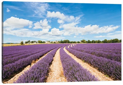 Lavender Field In Summer, Provence, France Canvas Print #TEO50