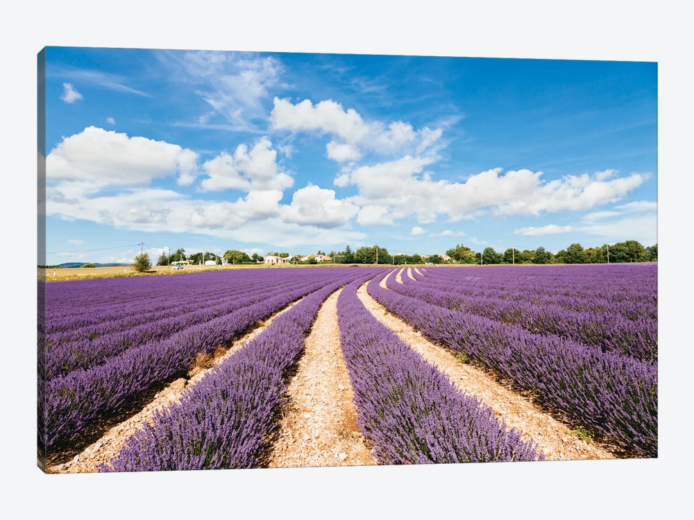 Lavender Field In Summer, Provence, France by Matteo Colombo 1-piece Canvas Print