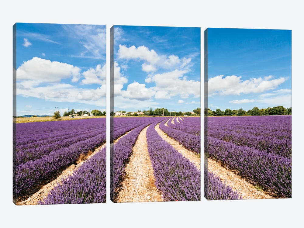 Lavender Field In Summer, Provence, France by Matteo Colombo 3-piece Canvas Art Print