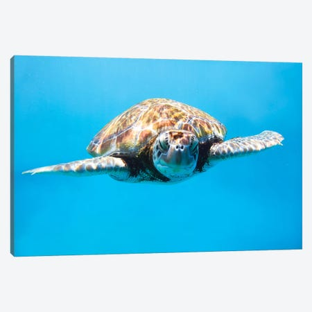 Sea Turtle II Canvas Print #TEO510} by Matteo Colombo Canvas Art
