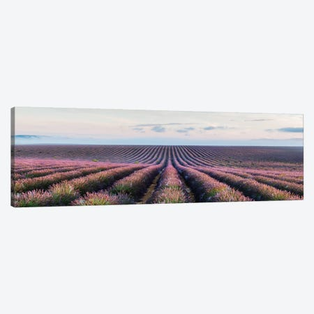 Lavender Field, Provence, France Canvas Print #TEO51} by Matteo Colombo Art Print