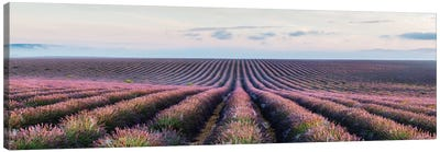 Lavender Field, Provence, France Canvas Print #TEO51