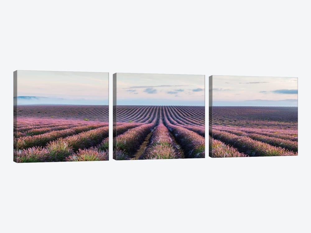 Lavender Field, Provence, France by Matteo Colombo 3-piece Canvas Artwork