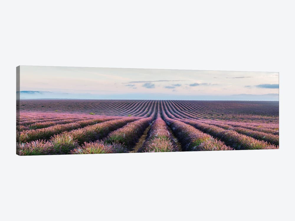 Lavender Field, Provence, France by Matteo Colombo 1-piece Canvas Wall Art