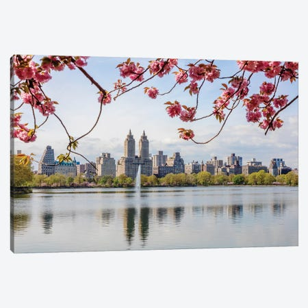 Cherry Blossom In Central Park, New York City I Canvas Print #TEO559} by Matteo Colombo Canvas Wall Art