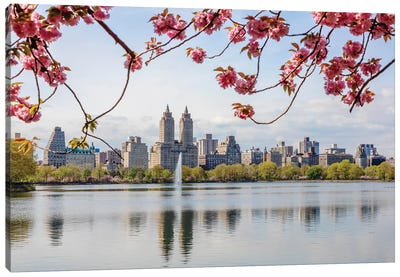 Cherry Blossom In Central Park, New York City I Canvas Art Print