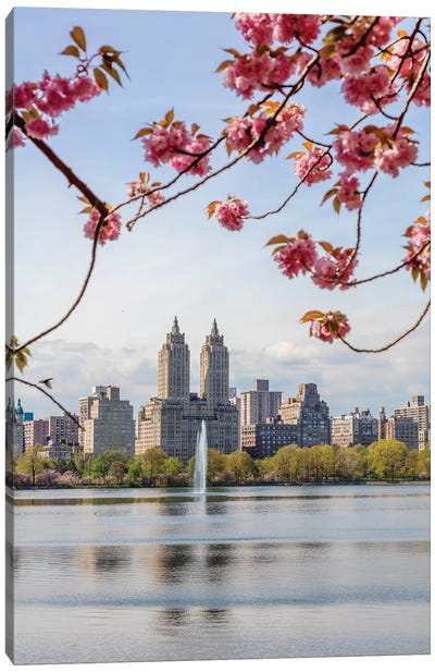 Cherry Blossom In Central Park, New York City II Canvas Art Print