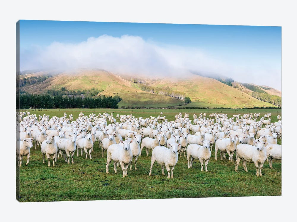 Flock Of Sheep, New Zealand 1-piece Canvas Wall Art