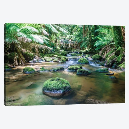 In The Tasmanian Rainforest, Australia Canvas Print #TEO587} by Matteo Colombo Canvas Wall Art