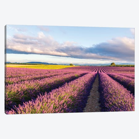 Lavender Field At Sunrise, Provence Canvas Print #TEO592} by Matteo Colombo Canvas Art