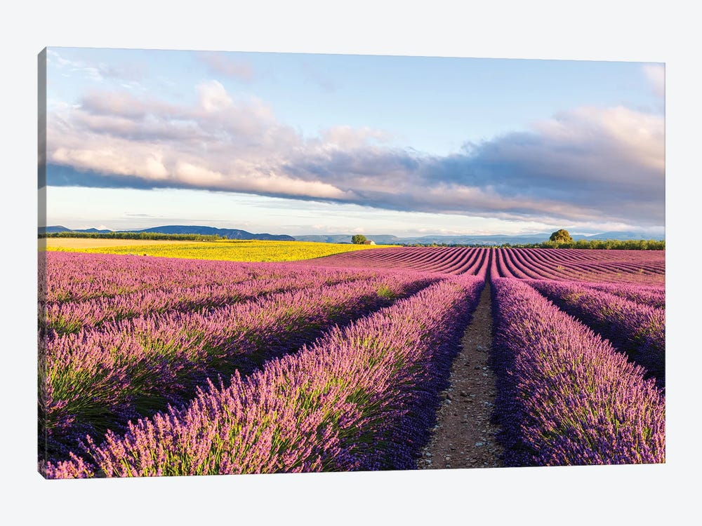 Lavender Field At Sunrise, Provence by Matteo Colombo 1-piece Art Print