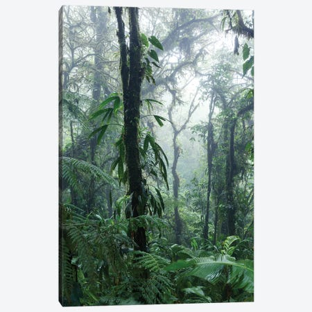 Monteverde Cloud Forest, Costa Rica 3-Piece Canvas #TEO610} by Matteo Colombo Canvas Art Print