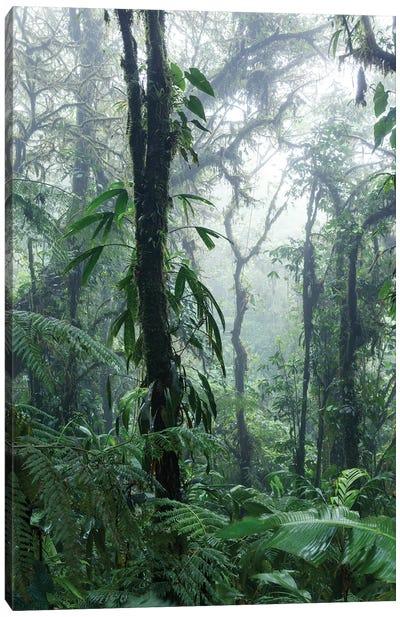Monteverde Cloud Forest, Costa Rica Canvas Art Print