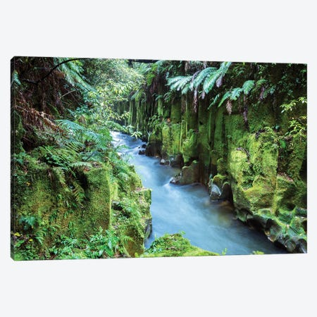 Whirinaki Forest, New Zealand Canvas Print #TEO668} by Matteo Colombo Canvas Art