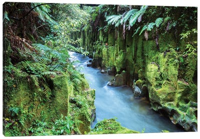 Whirinaki Forest, New Zealand Canvas Art Print
