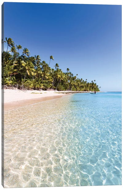 Palm Tree Laden Beach, Republic Of Fiji Canvas Art Print
