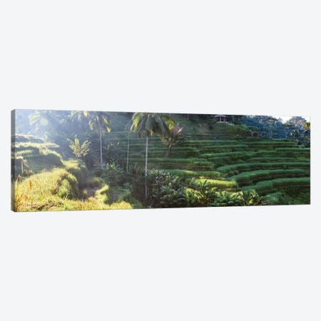 Rice Terraces Of Bali I Canvas Print #TEO733} by Matteo Colombo Canvas Artwork