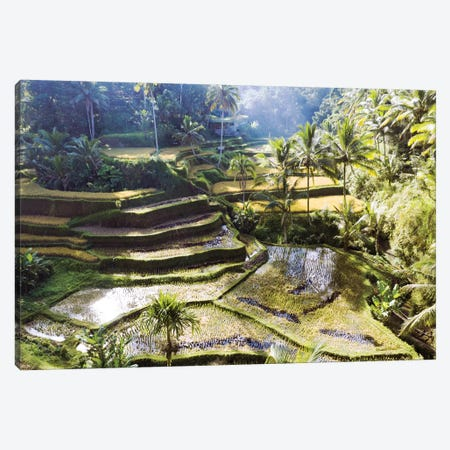 Rice Terraces Of Bali II Canvas Print #TEO734} by Matteo Colombo Canvas Print