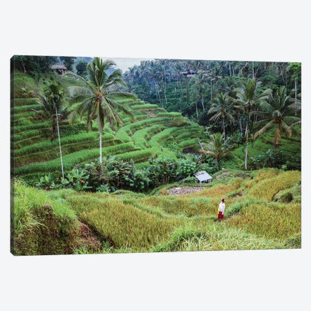Rice Terraces Of Bali III Canvas Print #TEO735} by Matteo Colombo Canvas Print