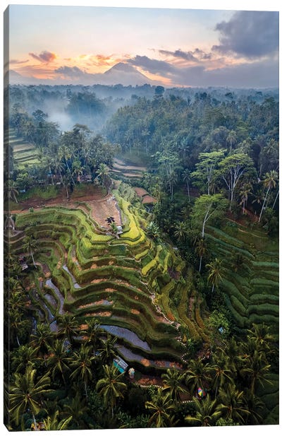 Rice Terraces Of Bali IV Canvas Art Print