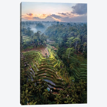 Rice Terraces Of Bali IV Canvas Print #TEO736} by Matteo Colombo Art Print
